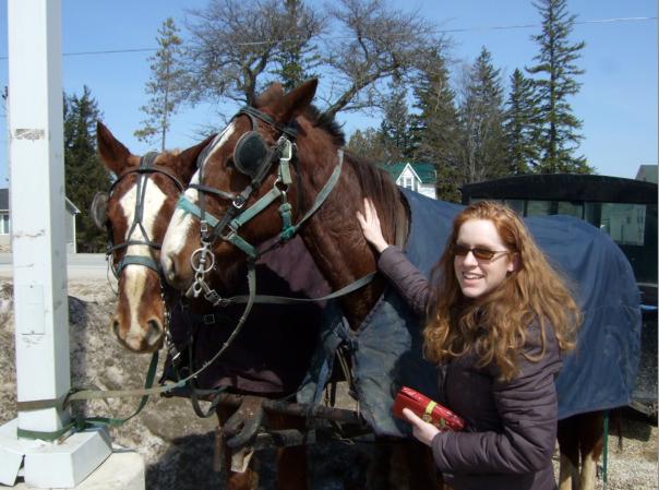 menonitehorses